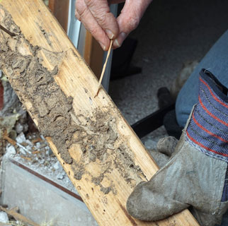 Termite Inspections - B Safe Home Inspections